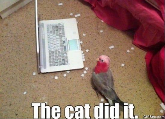 cat-did-it