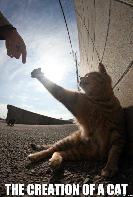 creation-of-cat
