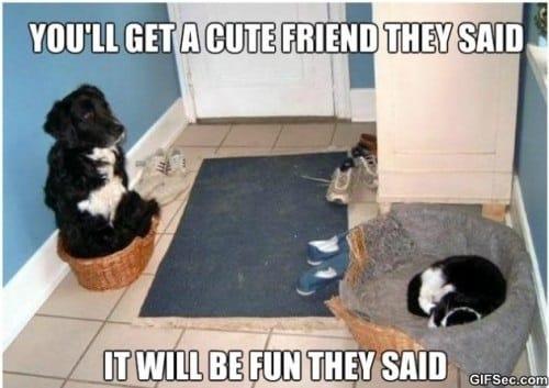 dogs-be-like