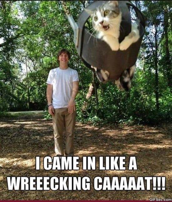 wrecking-cat