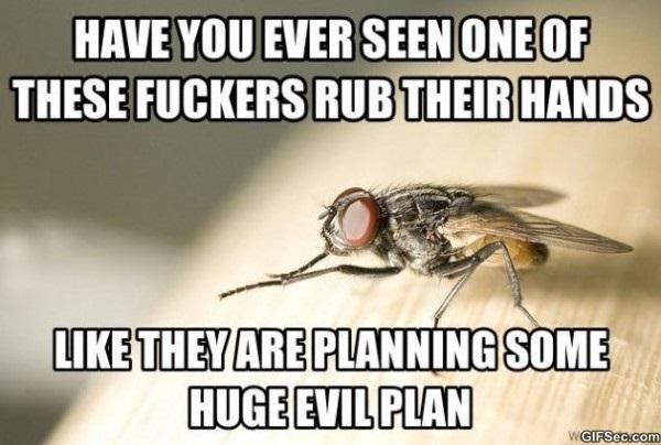 evil-plans