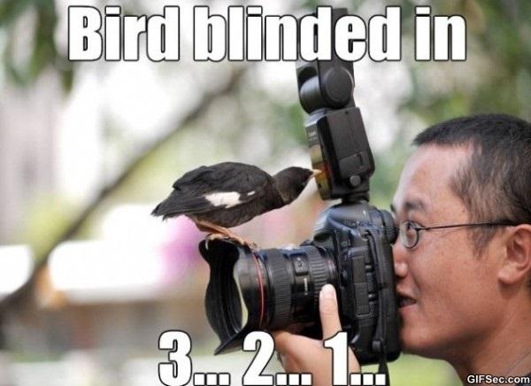 poor-bird