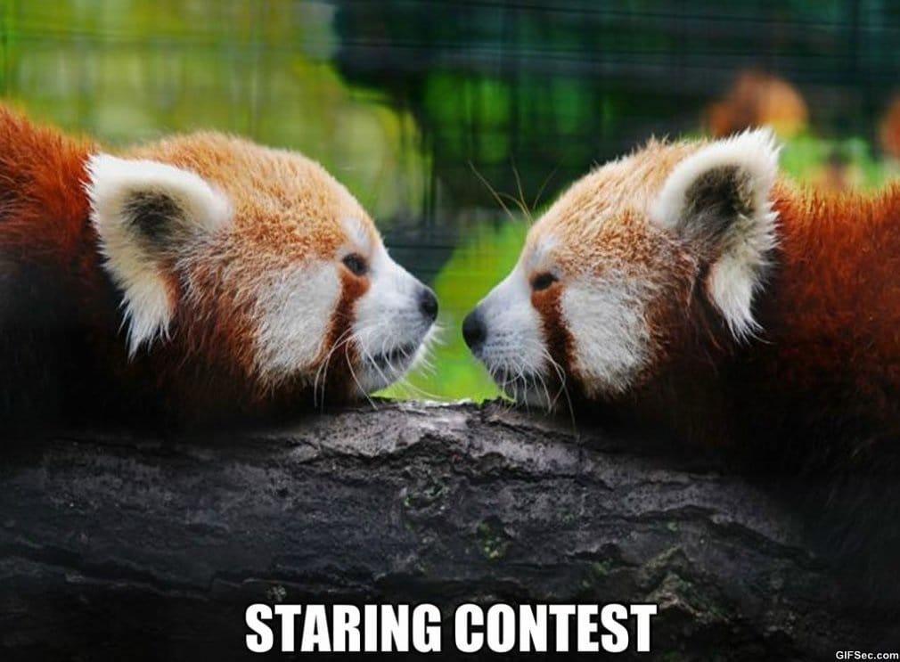 staring-contest