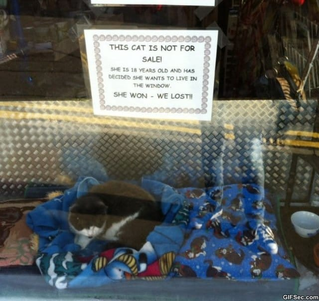 cat-not-for-sale