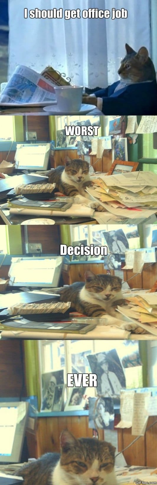 the-office-cat