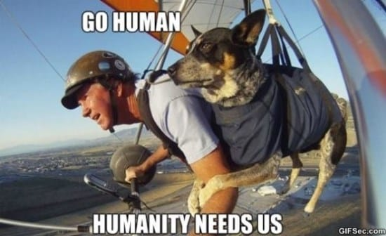 human-memes