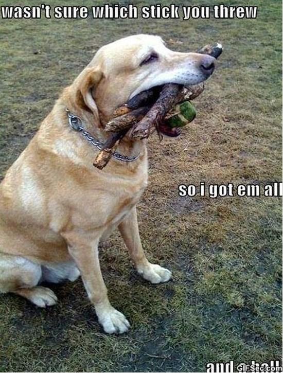 dog-memes