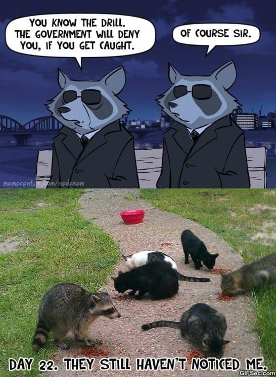 funny-operation-raccoon-city