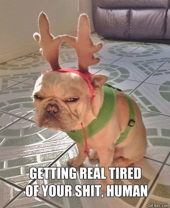 funny-reindeer-dog-is-not-amused