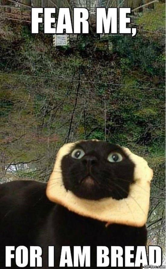 bread-cat