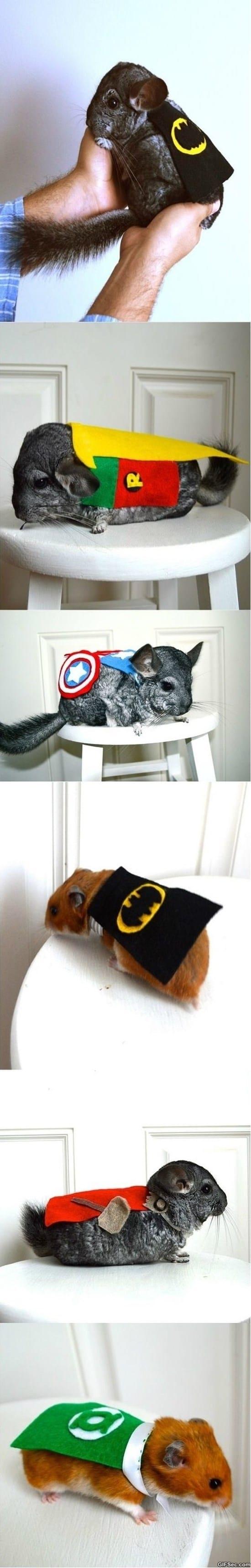 chinchillas-dressed-as-superheroes