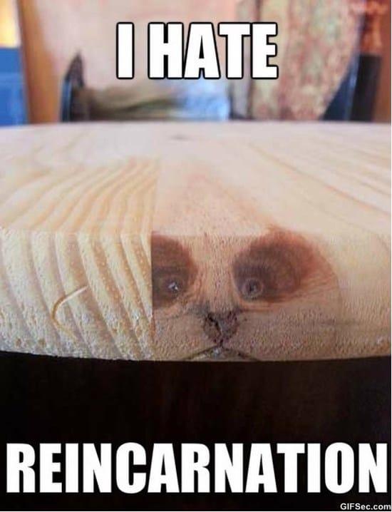 grumpy-cat-reincarnation
