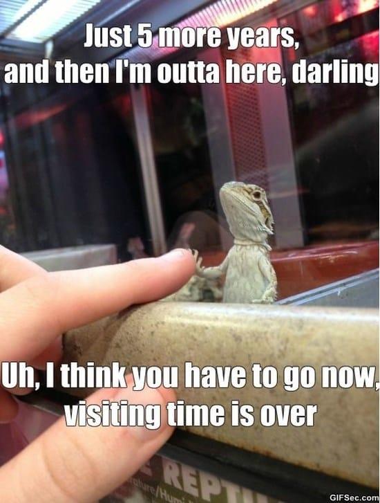 lizard-in-jail