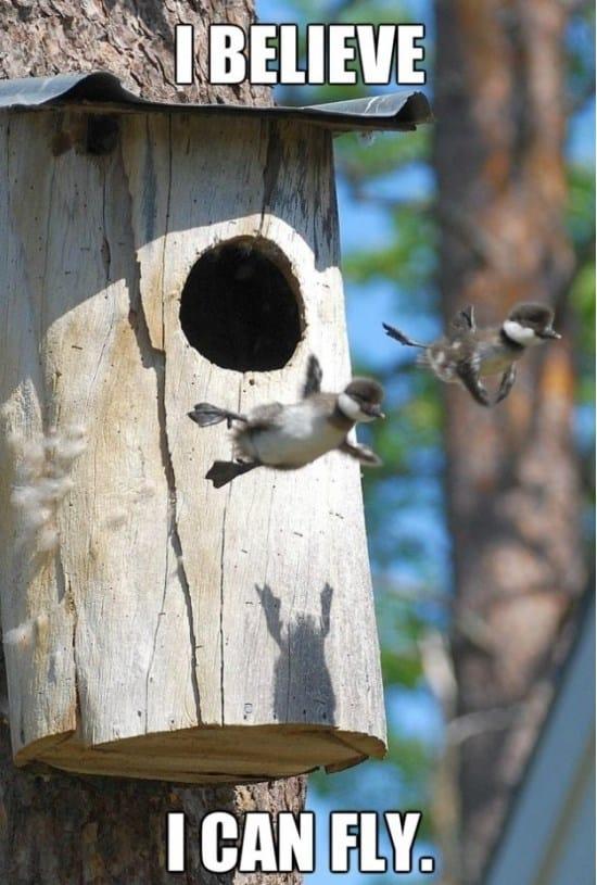baby-wood-ducks