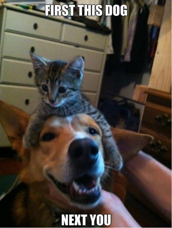 cats-anddogs