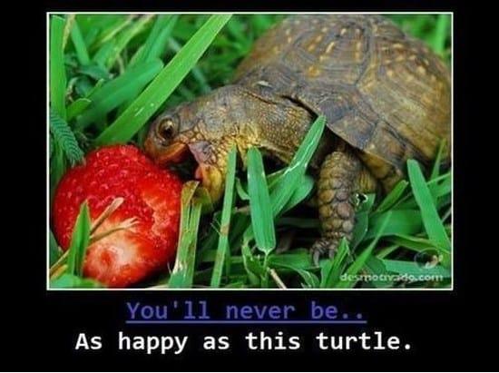 happy-turtle