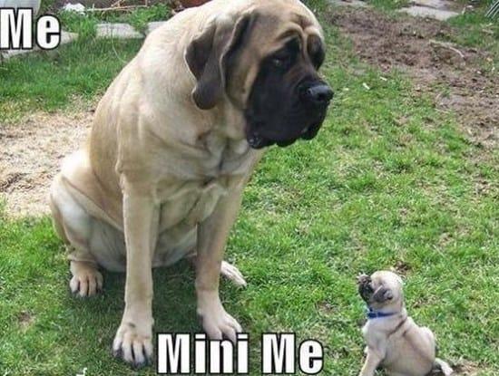 mini-me