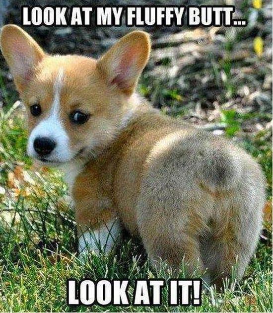 my-fluffy-butt