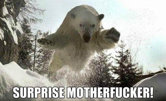 polar-jump