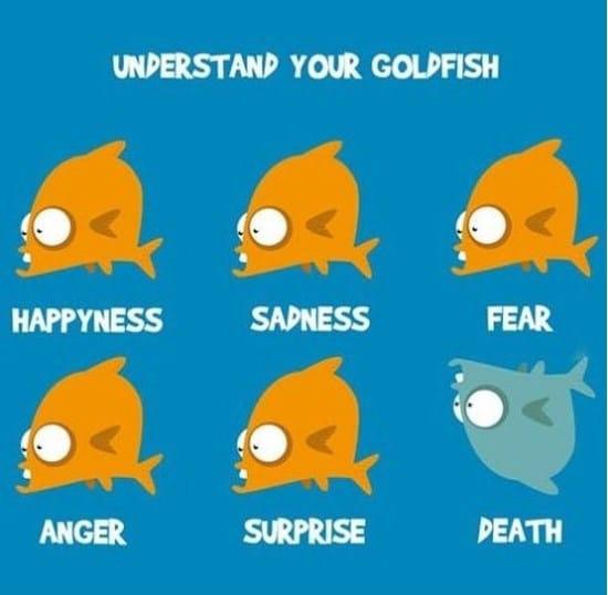 understand-your-goldfish