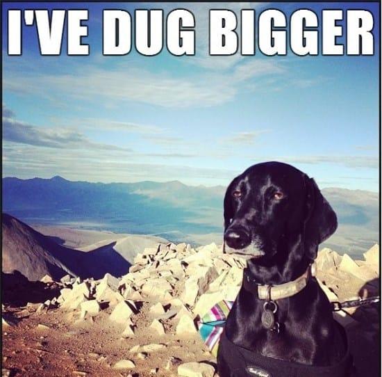 unimpressed-dog