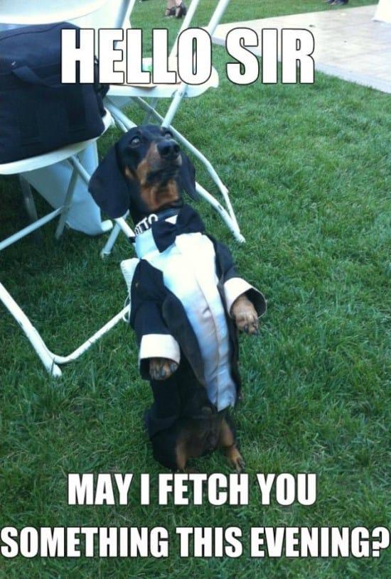 waiter-dog