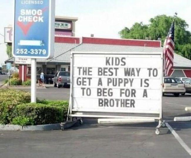 best-way-to-get-a-puppy