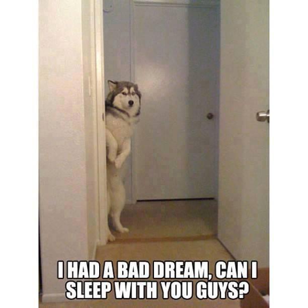 had-a-bad-dream
