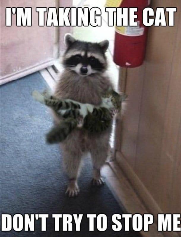 im-taking-the-cat