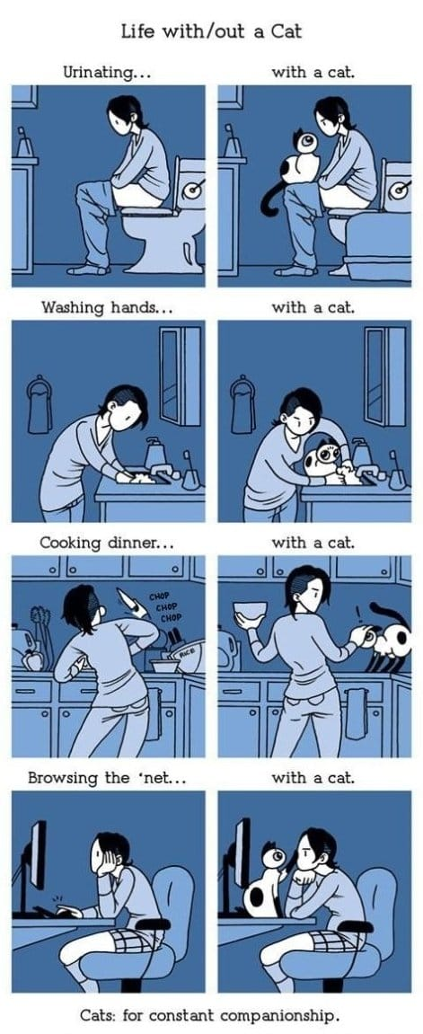 life-without-a-cat
