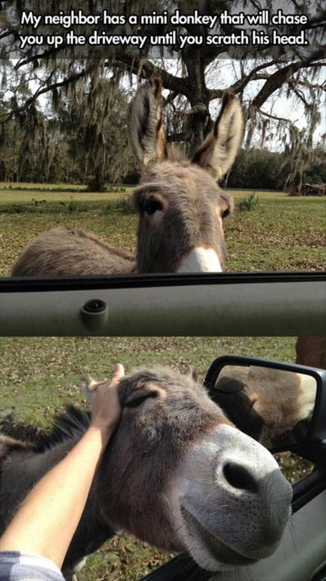 reward-for-doin-donkey-work