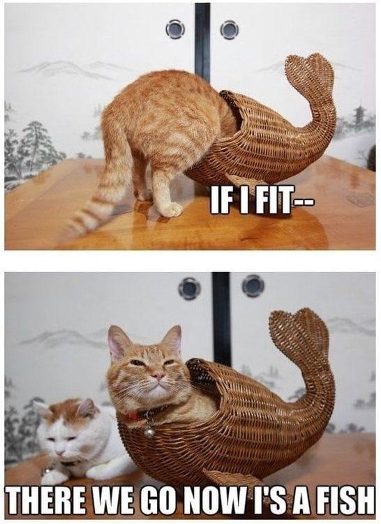 a-catfish