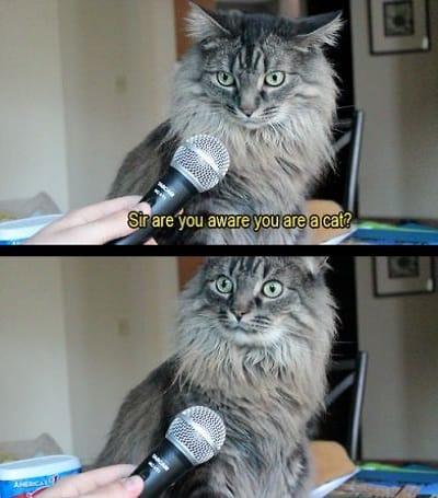 being-interviewed
