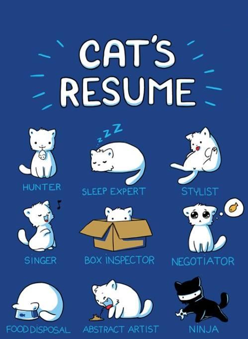 cats-resume