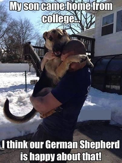 dogs-funny