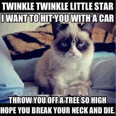 grumpy-cats-reciting-a-poem