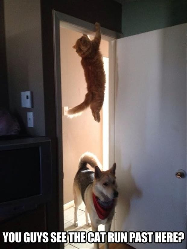 guys-see-the-cat