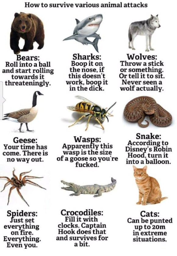 how-to-survive-animal-attacks