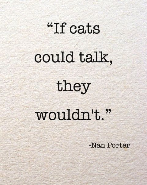 if-cats-could-talk