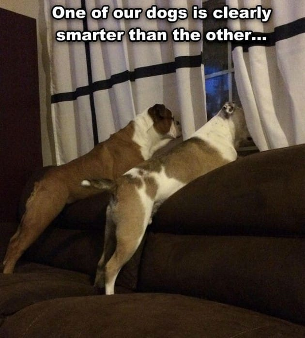 one-dogs-clearly-the-smarter-one