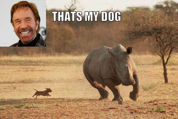 thats-my-dog