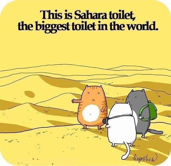 the-sahara