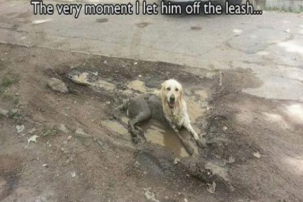 the-moment-hes-let-of-the-leash