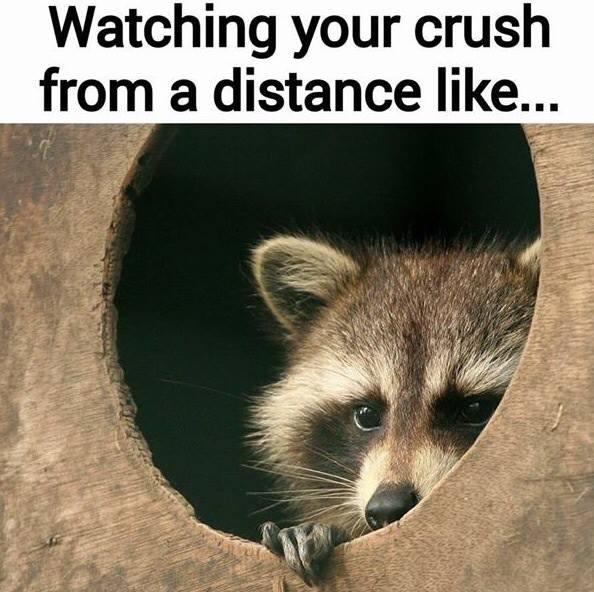 watching-your-crush