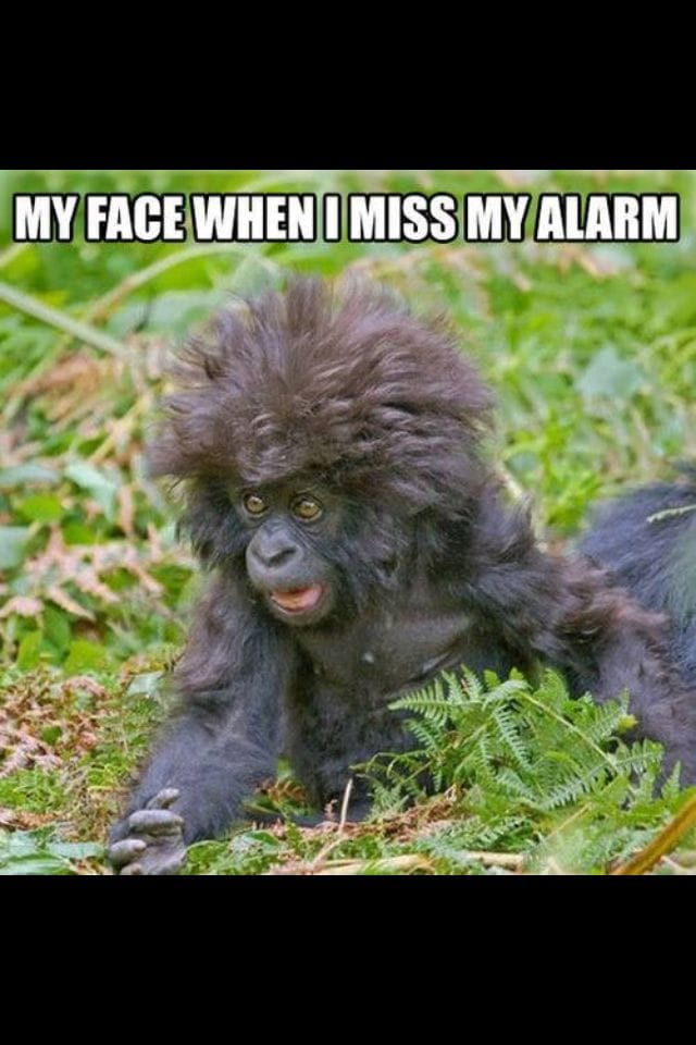 when-i-miss-the-alarm