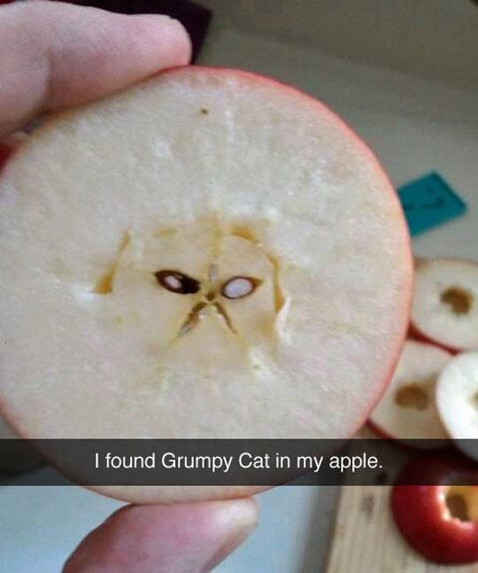 while-cutting-an-apple