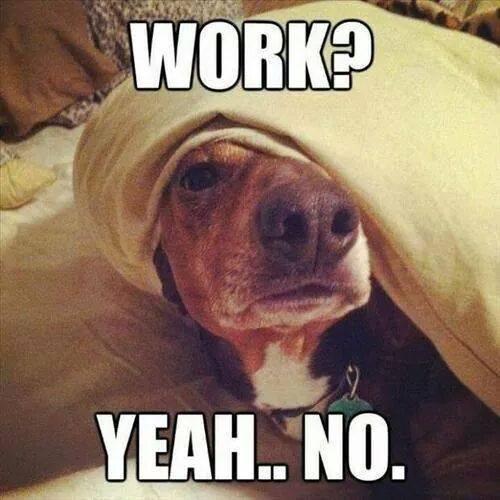 work-funny-dog