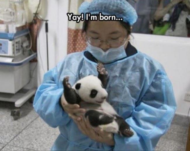 yay-im-born