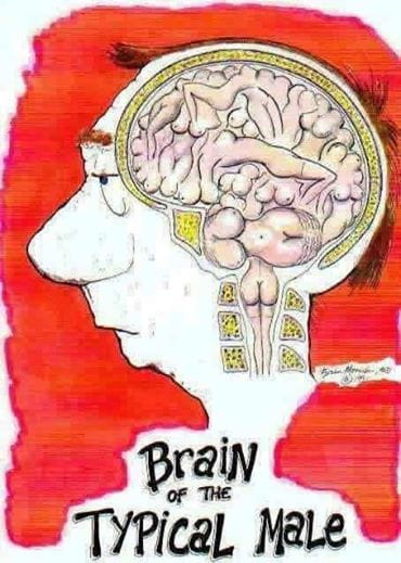 brain-of-a-typical-male