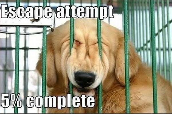 escape-attempt